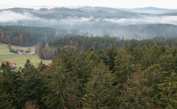 Deutscher Wald als Investmentfokus, Foto: Getty Images