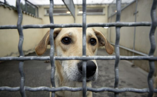 Ein Hund in einem Tierheim der Tierschutzorganisation Tasso <br> e.V.