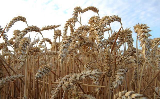 Wetten auf die Entwicklung von Agrarrohstoffen und Nahrungsmittelpreisen, sind umstritten. Kritiker machen sie für Preissteigerungen mitverantwortlich. Bild: Gettyimages