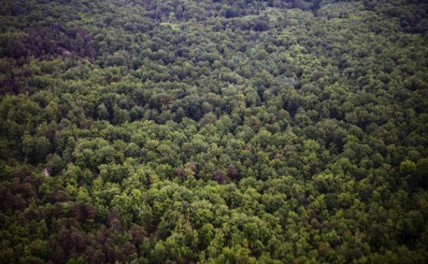 Harvard investiert in Nutzwälder- Weltweit. Foto: Getty Images