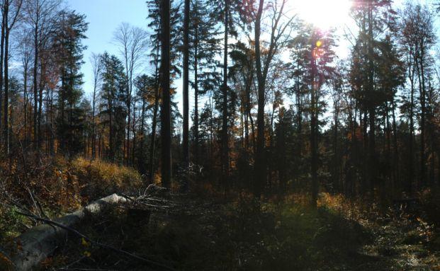 Viele vermögende Investoren investieren als Inflations-Schutz in Wald. Foto: Nordcapital