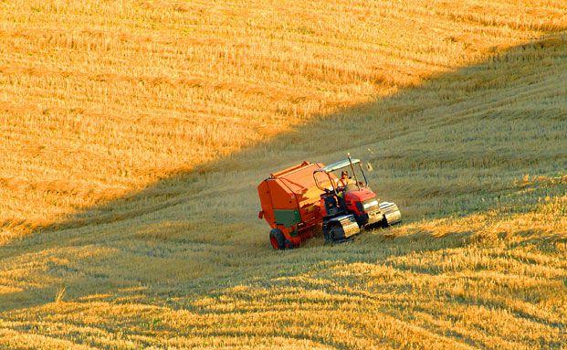 Agrarrohstoffe werden auch weiterhin in den Portfolios der Deutschen Bank und der Allianz zu finden sein. Foto: Fotolia
