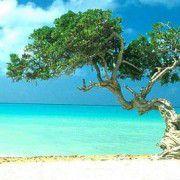 Die Greendaq hat ihren Sitz auf der<br>karibischen Insel Aruba <br>Quelle: Landennet.nl