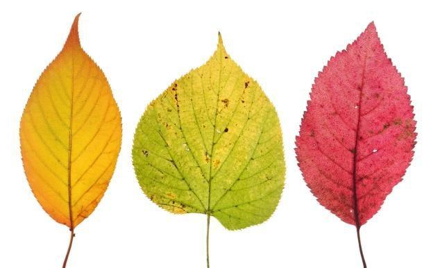 Diversifikation gilt als das A und O f&uuml;r Ertrag - im Wald wie bei der Geldanlage. <br>Doch auch sie kennt Grenzen. Quelle: Fotolia