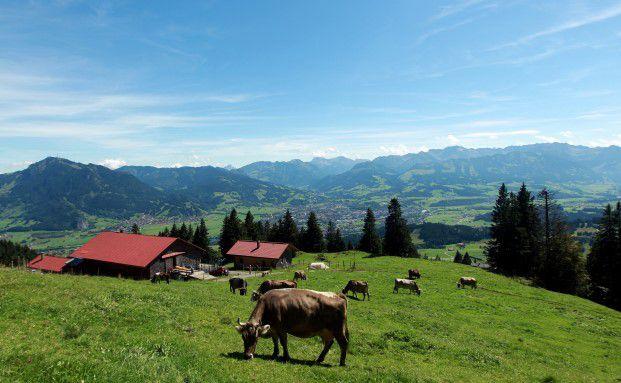 Kühe grasen nahe Immenstadt im Allgäu: Nachhaltiges Anlegen kann auch zum Erhalt dieser grünen Idylle dienen. Foto: Getty Images