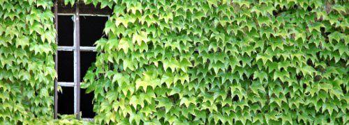 : Grünanlagen gesucht