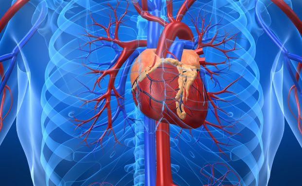 Schutz bei Herzinfarkt: Dread-Disease-Policen<br>sichern Schl&uuml;sselpersonen wirtschaftlich ab<br>Quelle: Fotolia