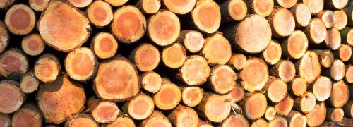 6.000.000.000.000 Streichhölzer pro Jahr: Alles über Holz