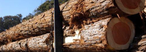 : Wipfelstürmer – Emissionshäuser entdecken Holzinvestments