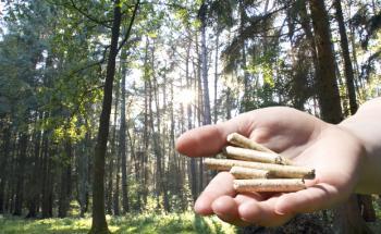 Holz-Investments wie in solche Pellets erwiesen sich zuletzt als schlechter Rat. Foto: Thorben Wengert / <a href='http://www.pixelio.de' target='_blank'>pixelio.de</a>