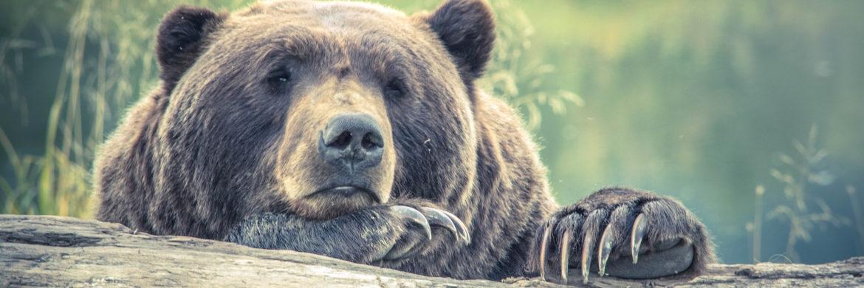 Euro-Rentenmarkt: EZB-Ausblick lockt Zins-Bären aus dem Winterschlaf|© Photo Collections