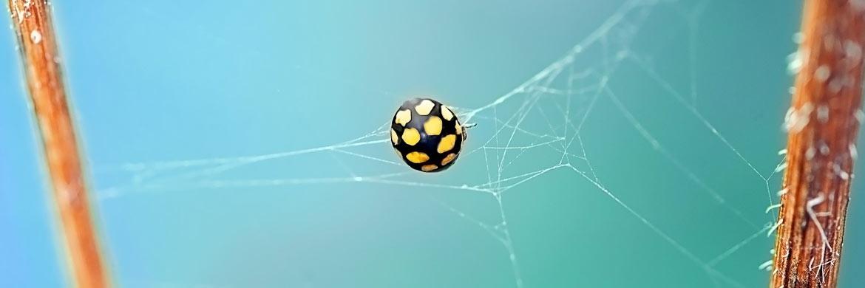 Spinnennetze werden Käfern zum Verhängnis – bei Investoren sind es Anleihen oder Aktien zweifelhafter Qualität|© Pixabay