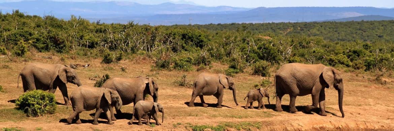 Als Schwellenländer gelten je nach Abgrenzung mehr als 40 Staaten wie zum Beispiel Südafrika.|© pixabay.com