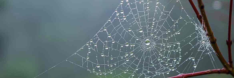 Wassertropfen im Spinnennetz: Die Natur diente als Vorbild für Polyethelen-Netze, mit denen Nebel gesammelt und damit Wasser gewonnen wird. |© Fotolia