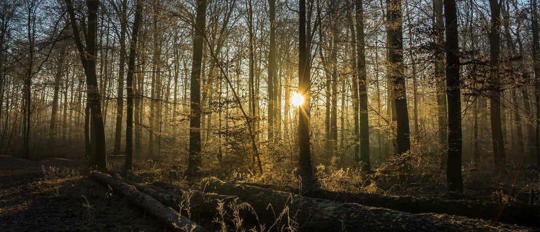 """Wald. Holzinvestments sind nicht so umweltvertr&auml;glich, wie Anlegern oft vermittelt wird, sagt Udo Rieder von der KSW Verm&ouml;gensverwaltung.&nbsp; &nbsp;&copy; Bernd Kasper/<a target=""""_blank"""" href=""""https://www.pixelio.de/"""";>Pixelio.de</a>"""