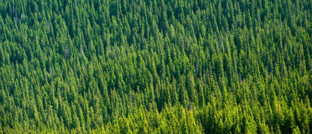 Waldgebiet von oben: Finanzberater Rüdiger Reinholz empfiehlt zwei nachhaltige Fonds zur Altersvorsorge.|© Pexels