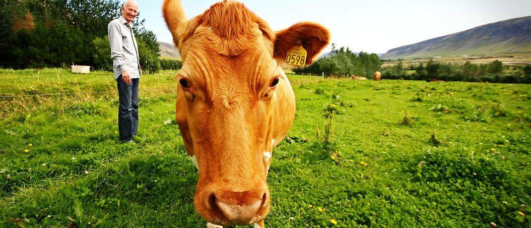 Bauer und seine Kuh auf Island: Mit 46,3 Jahren dauert ein Arbeitsleben dort am längsten in der EU.|© Håkon Fossmark / Pixabay