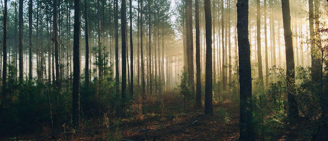 Wald in der Rhön: Neben Anlagekonzepten mit Fokus auf Wandelanleihen gehören auch Investitionen in Forst- und Landwirtschaft zum Geschäftsfeld der Vermögensverwaltung Salm-Salm & Partner.|© Steven Kamenar/Unsplash