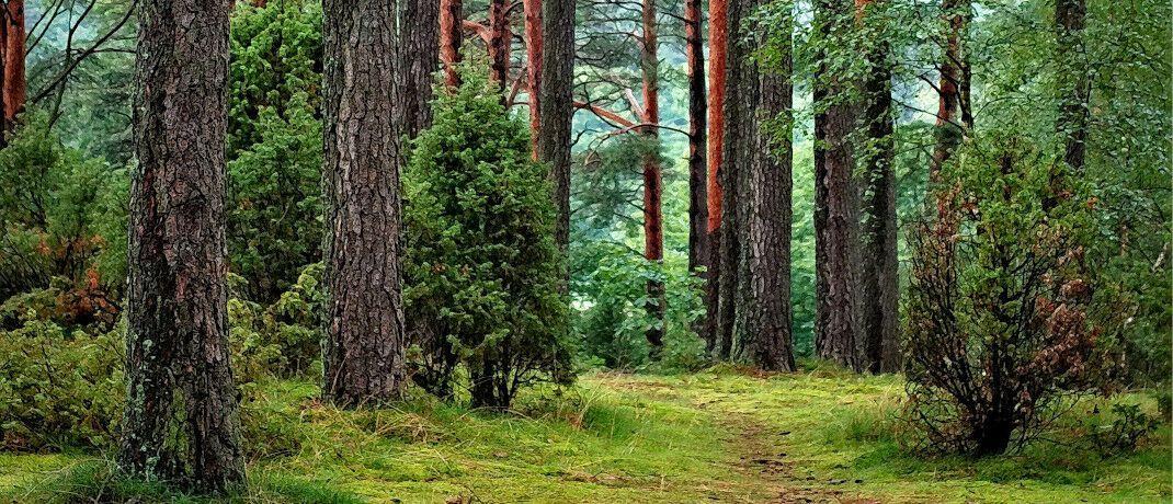 Im Wald: Der Versicherer Zurich startet drei nachhaltige Depotmodelle.|© Pixabay