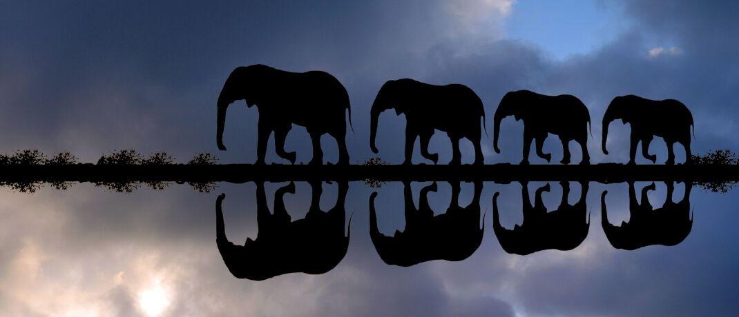Elefantenfamilie in Afrika: Investments auf dem Kontinent gelten bei vielen Anlegern als exotisch. |© imago images / blickwinkel
