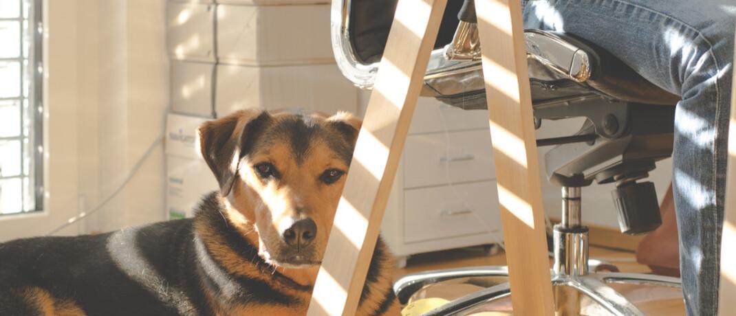 Arbeiten von zuhause: In der Corona-Krise wird das Homeoffice für viele Arbeitnehmer von der Ausnahme zur Regel.|©  Lum3n.com
