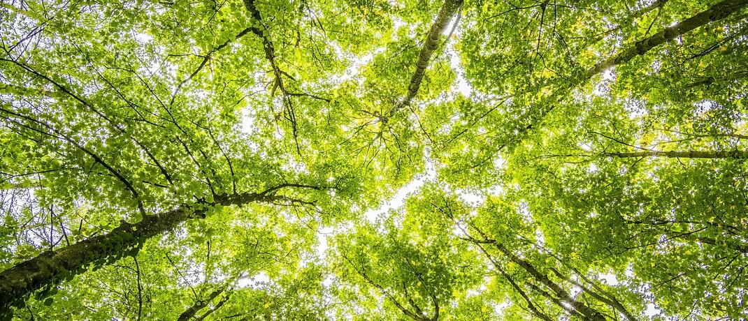 Im Wald: Obwohl die meisten Deutschen nach eigenen Angaben bei der Geldanlage Wert auf Umweltschutz & Co. legen, kaufen nur die wenigsten nachhaltige Fionds.|© Pexels