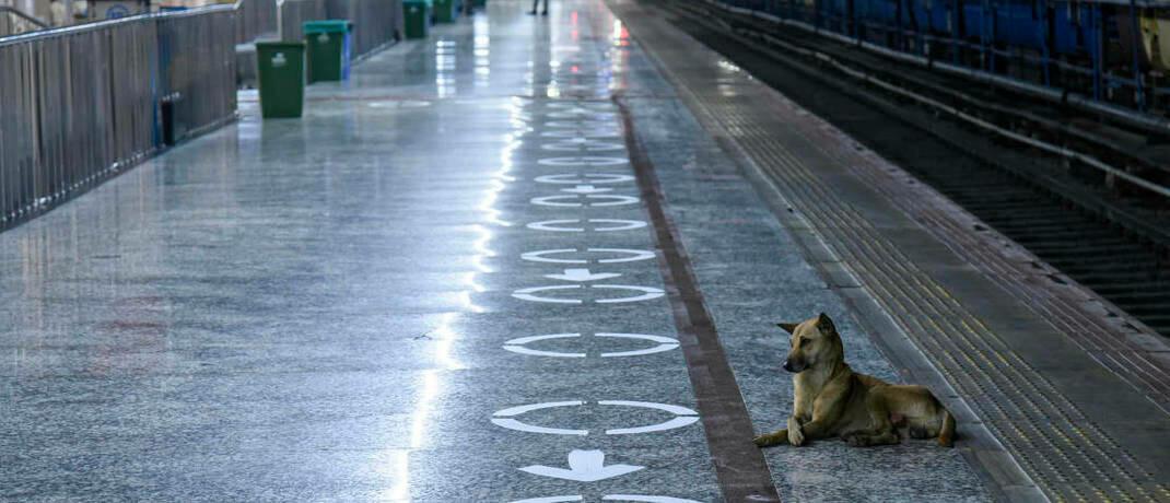 Vereinsamter Hund am menschenleeren Hauptbahnhof in Indien: In der Covid-19-Pandemie nutzen Menschen häufiger ihr Auto, statt U-Bahnen, Busse und Züge. Mit einem ESG-Ansatz können Anleger zumindest die CO2-Fußabdrücke ihrer Portfolios verringern.