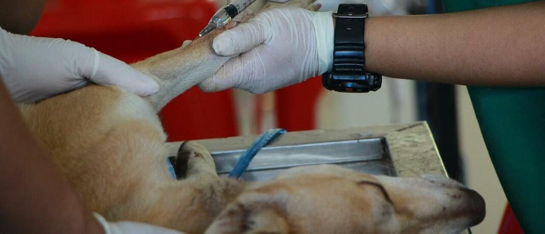 Hund auf dem Operationstisch: Die neue Partnerschaft der Hansemerkur mit Tchibo umfasst unter anderem eine Police, die Kosten einer Operation für Haustiere trägt.|© Foto von Pranidchakan Boonrom von Pexels
