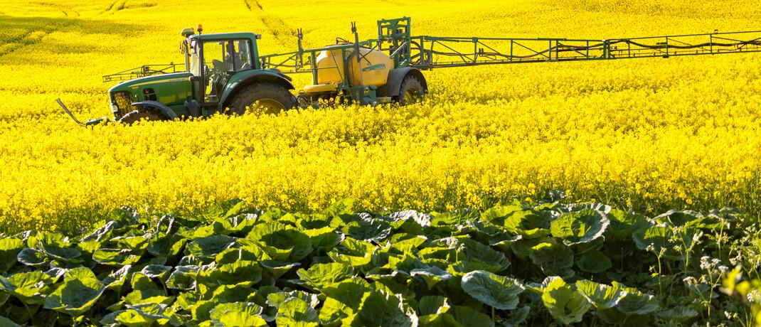 Pestizideintrag auf einer Anbaufläche in Mecklenburg-Vorpommern: Landwirtschaft und Industrie müssen für eine nachhaltige Wirtschaft auch den Schutz von Pflanzen und Tieren berücksichtigen.