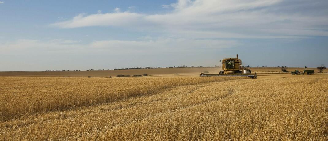 Weizenernte in Südaustralien: Australien exportiert enorme Mengen an Rohstoffen, was seine Währung mit der Weltwirtschaft steigen und fallen lässt.|© imago images / UIG / Nick Rains