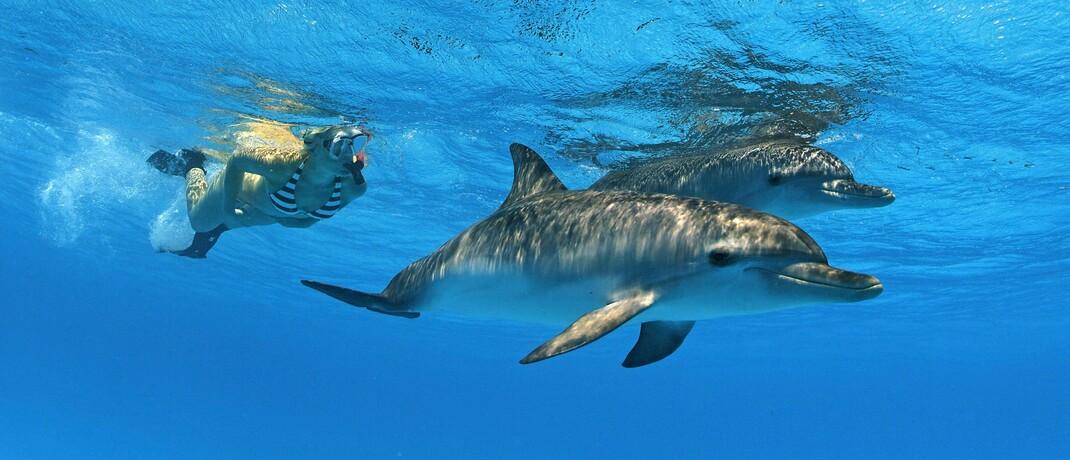 Taucherin mit Flussdelphinen: In den vergangenen 50 Jahren haben sich die Bestände von im Süßwasser lebenden Arten um 83 Prozent verringert.|© imago images / imagebroker
