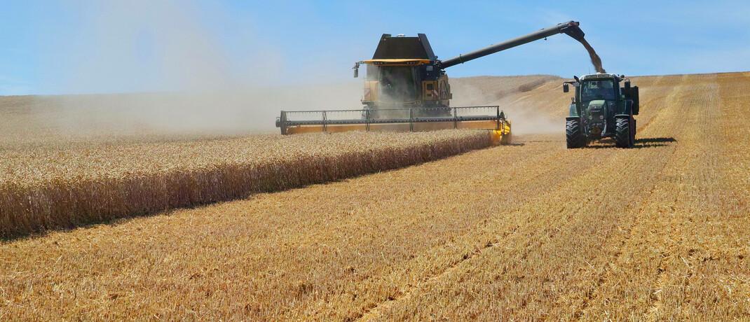 Weizenernte in Sachsen-Anhalt: Die Preise für Agrarrohstoffe hängen nicht nur an der Konjunktur, sondern auch am Wetter.|© imago images / Martin Wagner