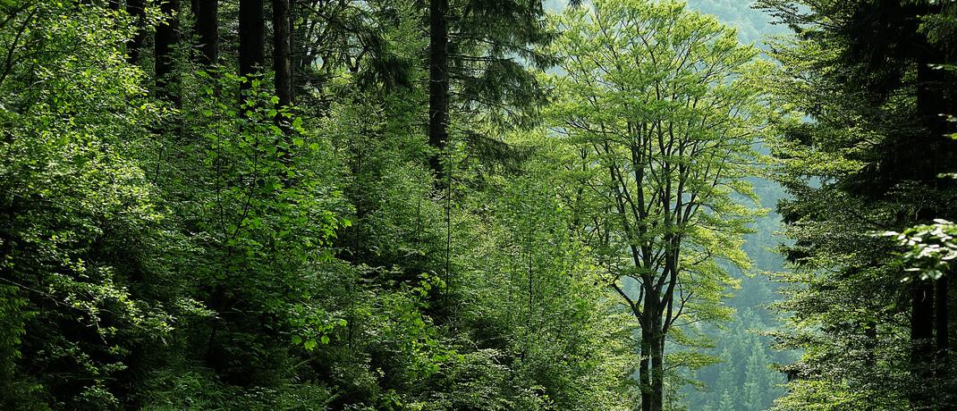 Im Wald: 16 Prozent der 18- bis 35-Jährigen hatten 2020 nachhaltige Geldanlagen.