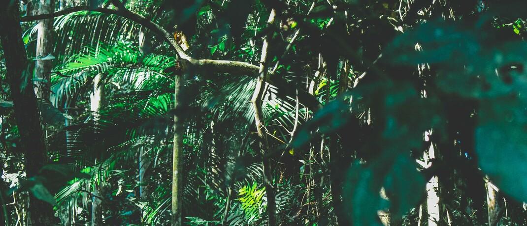 Tropischer Regenwald in Brasilien