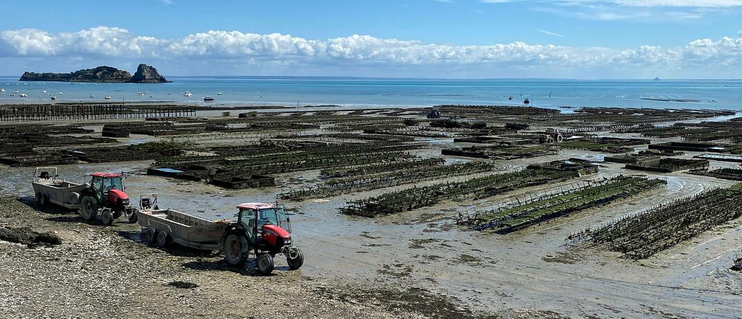 Austernfarm im französischen Cancale