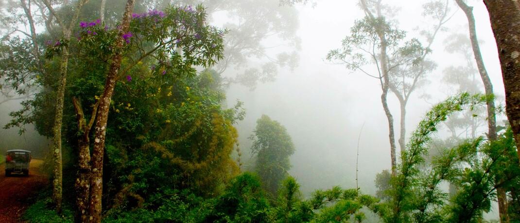 Morgenstunde im Regenwald