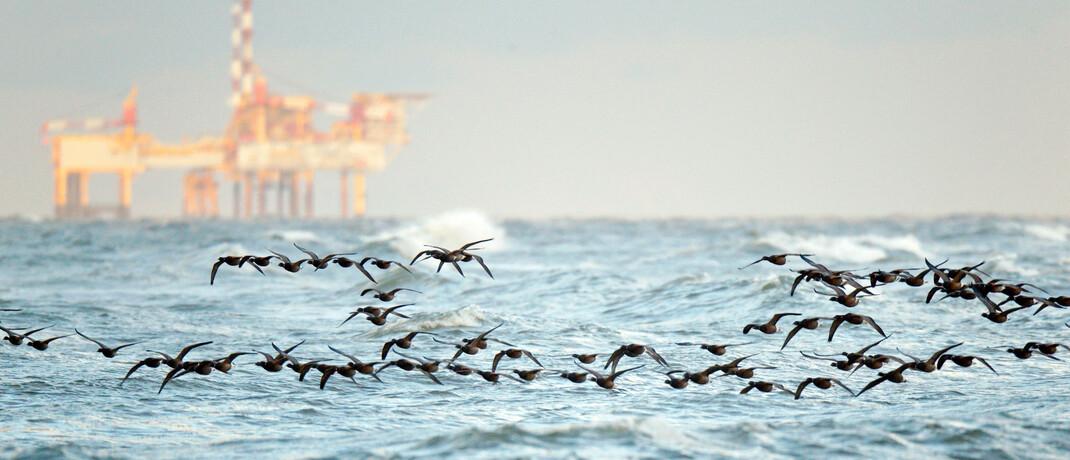 Vogelschwarm vor einer niederländischen Bohrinsel