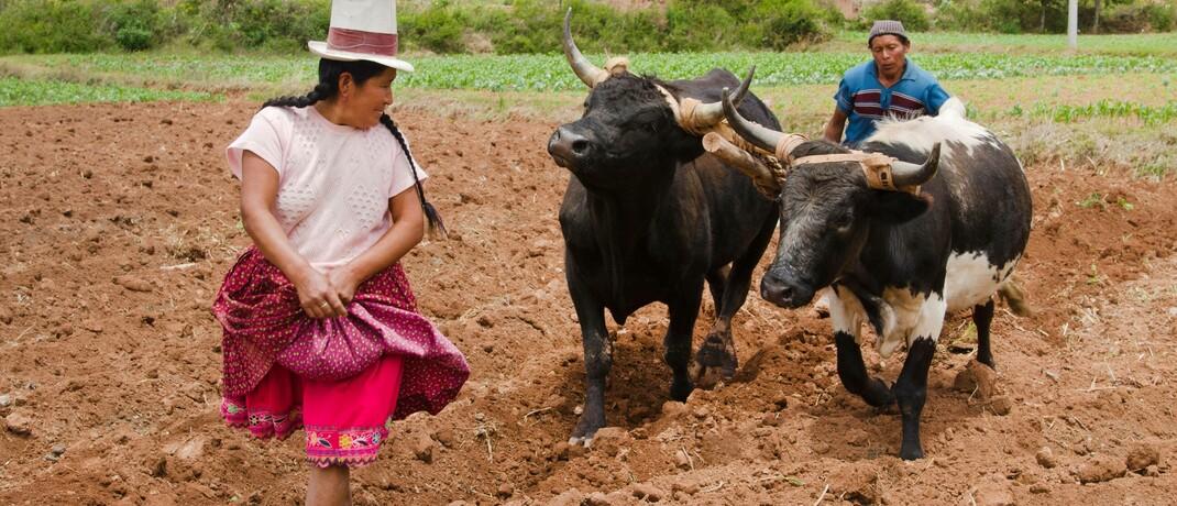 Traditioneller Ackerbau in Peru
