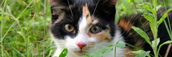 Nach der Katze geschaut - Versicherungsschutz eingebüßt, sagte das Landshuter Sozialgericht - und vewehrte einem Arbeitnehmer Leistungen der Berufsgenossenschaft