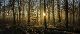 Wald. Holzinvestments sind nicht so umweltverträglich, wie Anlegern oft vermittelt wird, sagt Udo Rieder von der KSW Vermögensverwaltung.