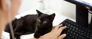Pechbringer schwarze Katze: Die Techniker der Allianz hatten jetzt wieder mit einem Systemausfall zu kämpfen.