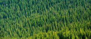 Waldgebiet von oben: Finanzberater Rüdiger Reinholz empfiehlt zwei nachhaltige Fonds zur Altersvorsorge.
