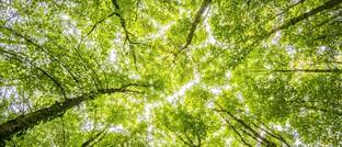 Im Wald: Obwohl die meisten Deutschen nach eigenen Angaben bei der Geldanlage Wert auf Umweltschutz & Co. legen, kaufen nur die wenigsten nachhaltige Fionds.