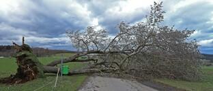 Entwurzelter Baum auf einer Straße im Siegerland