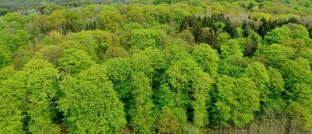 Naturbelassener Mischwald