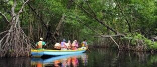 Touristen erkunden Mangrovenwälder in Mexiko