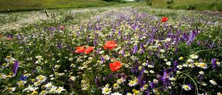 Blumenwiese in Italien