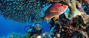Korallenriff im Roten Meer