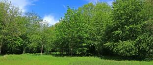 Wald in Nordrhein-Westfalen