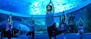 Yoga-Kurs im Ozeanarium des Zhuhai Chimalong Ocean Kingdom, China